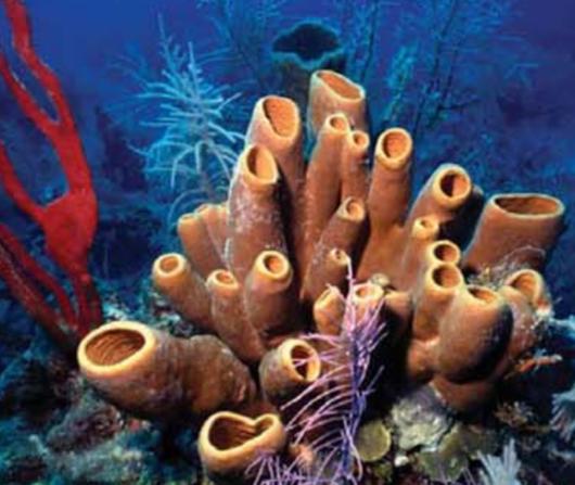Biomineralisation Process in Sea